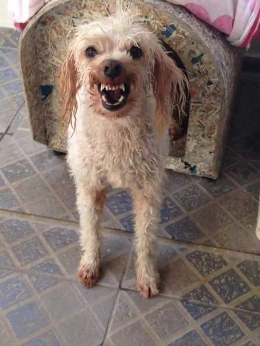 Foto de perra afuera de su casa gruñendo