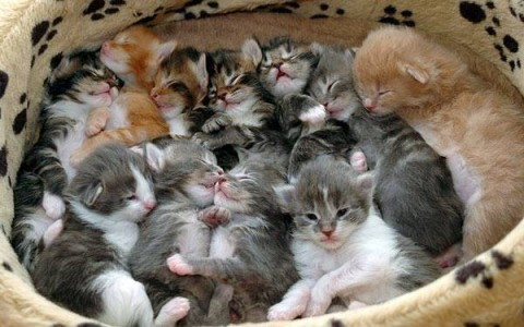 gatos camada