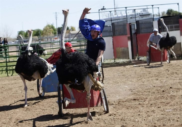 carrera de avestruces