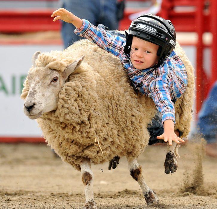 niño montado en una oveja