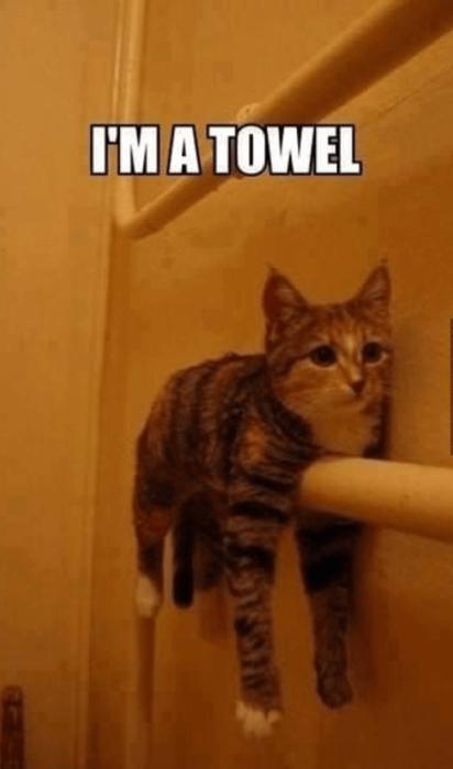 gato que se cree toalla