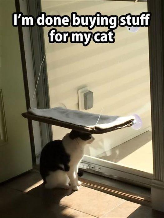 gato utiliza su cama como sombra