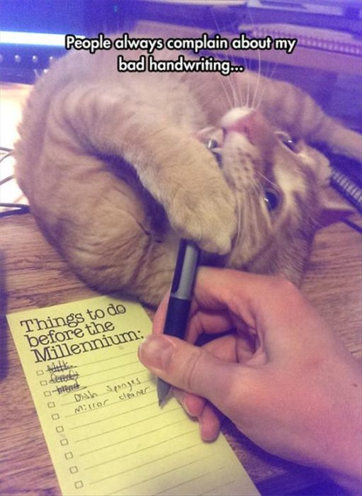 gato hecho bolita muerde un bolígrafo