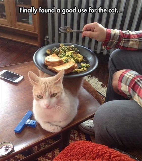 gato con comida encima