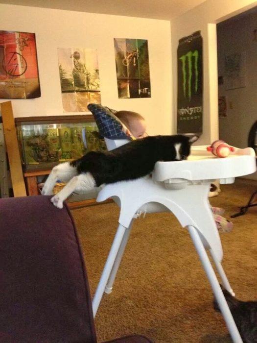 gato estirando con bebé