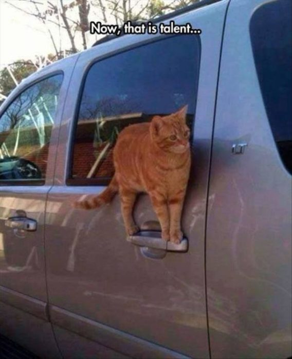 gato parado en una camioneta