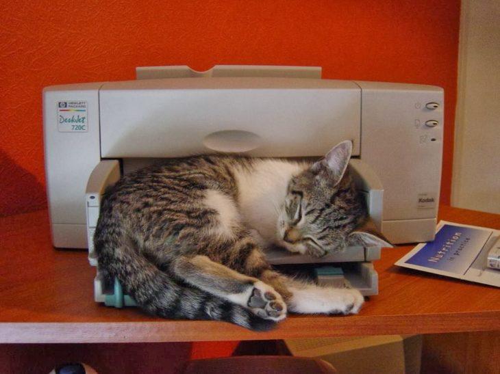 gato dormido en una impresora