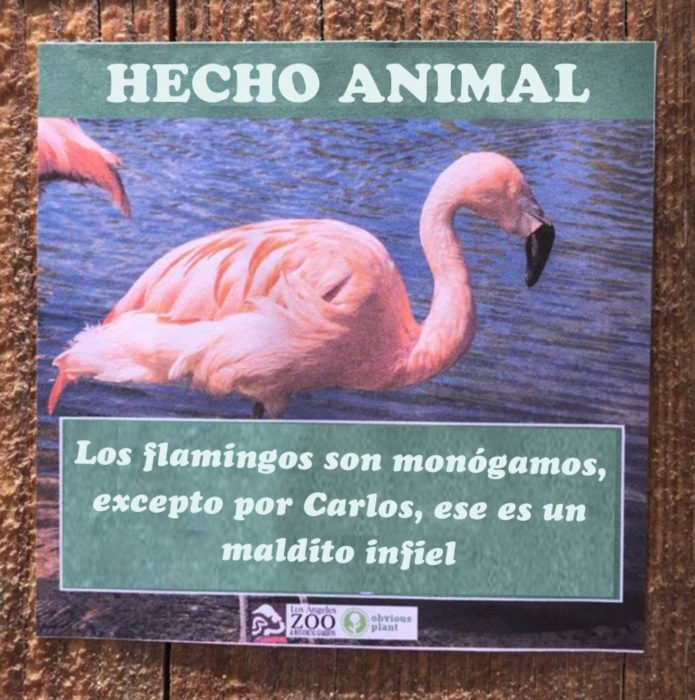 Flamingo infiel hecho animal