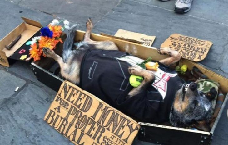 Perro en Nueva Orleands en un ataud y con traje
