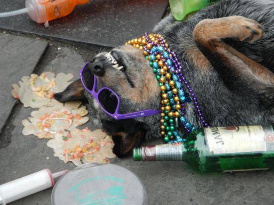 Perro tirado en las calles de nueva orleands borracho
