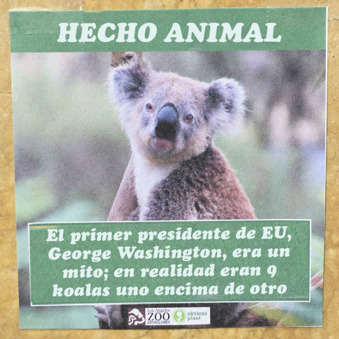 Koala Geoge Washinton hecho animal