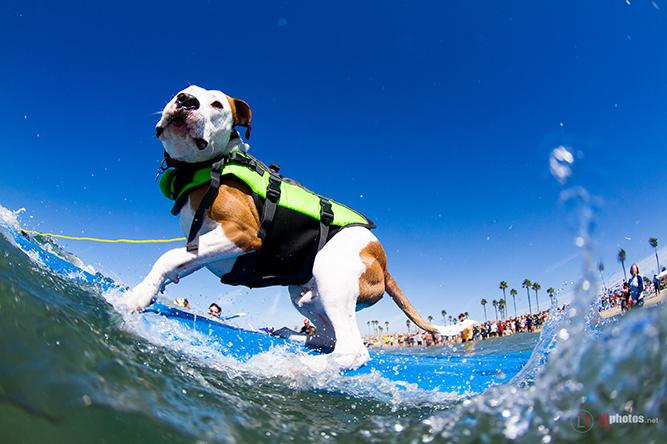 perro surfeando