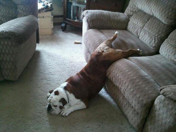 Perro tirado en mitad del sofá y mitad el piso
