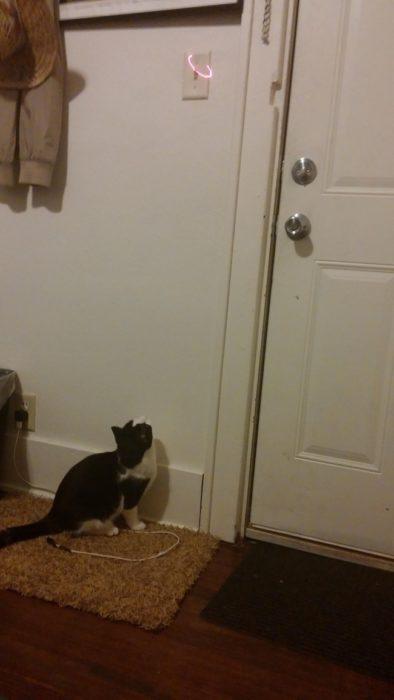 Gato viendo una luz en el interruptor de luz de la pared
