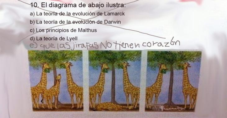 Respuestas ingeniosas. Las jirafas no tienen corazón