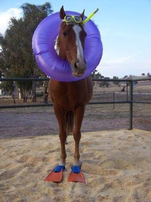 caballo gracioso salvavidas