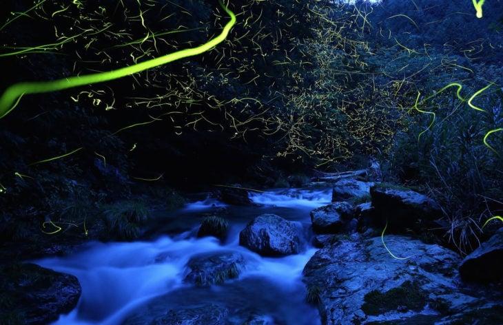 paisaje luciérnagas