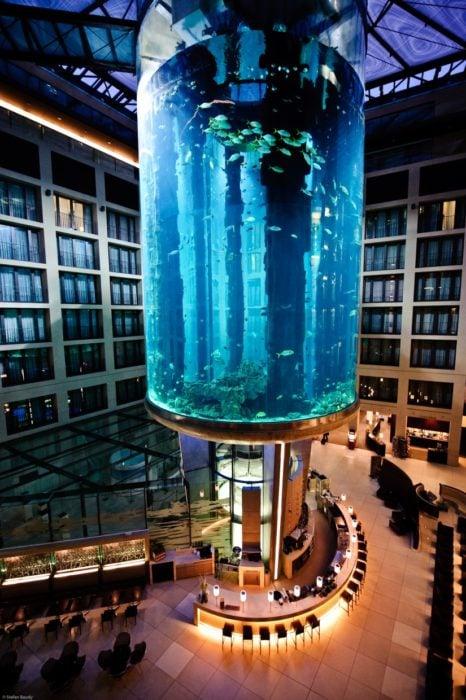 elevador con peces dentro