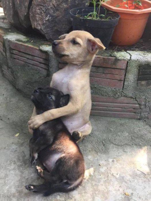 dos cachorros abrazados