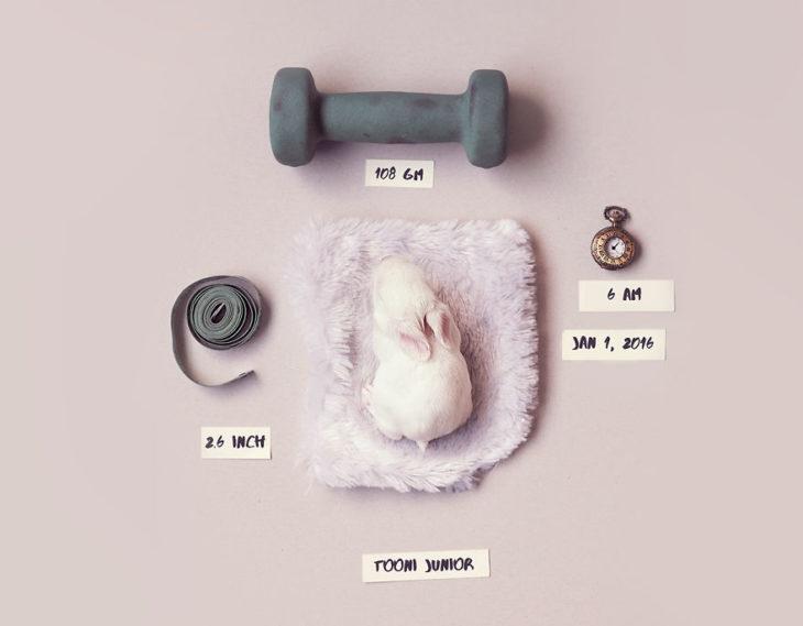 foto de conejo bebé