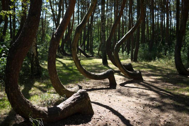 árboles distorcionados