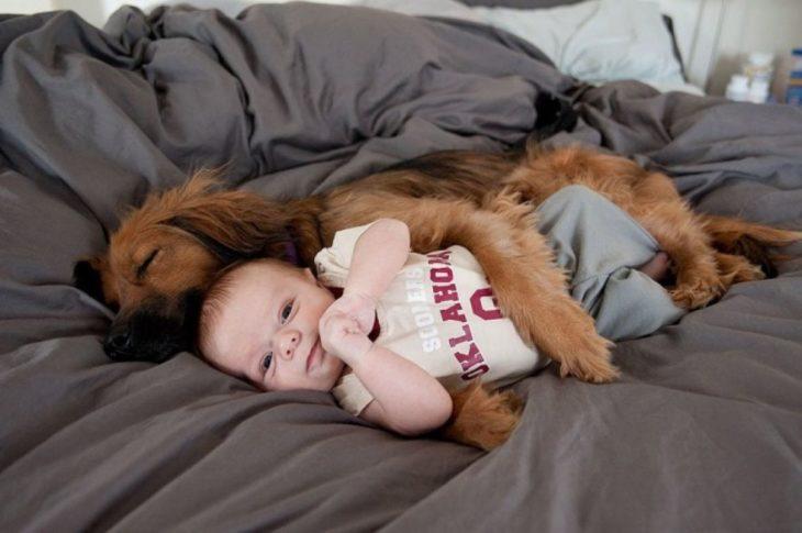 perro acafé dormido abrazando a bebé