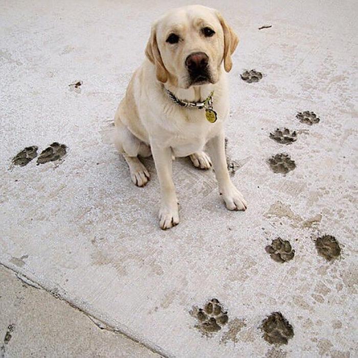 perrito marcó sus huellas en el suelo