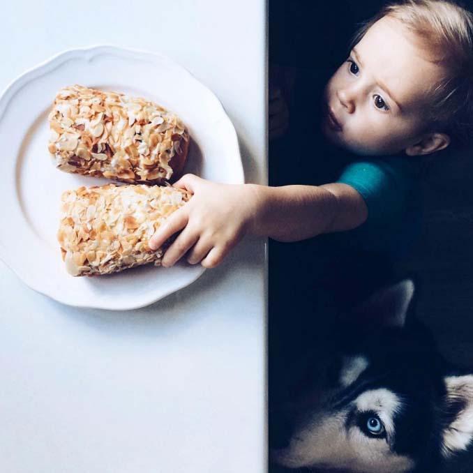 perro y niño robando comida