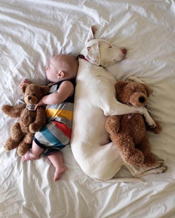 perro y bebé duermen con osos de peluche