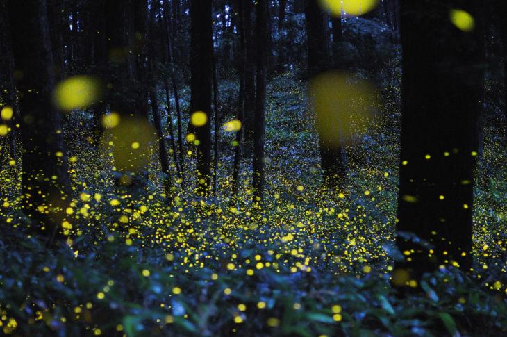 hermoso paisaje de luciérnagas