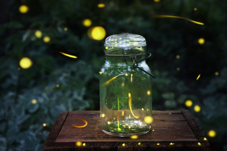 luciérnagas en un frasco