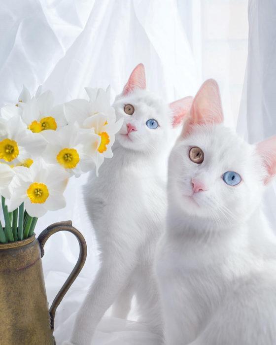 gatas blancas posando al lado de un florero