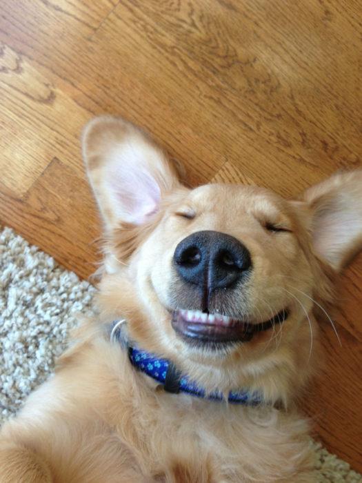 perro recostado sonriendo