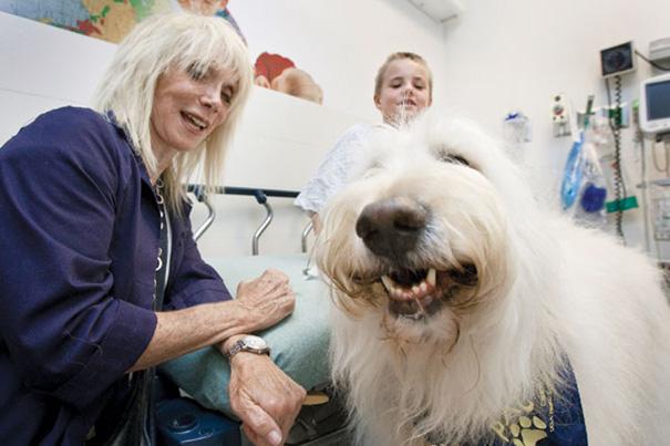 perro sonriendo en hospital