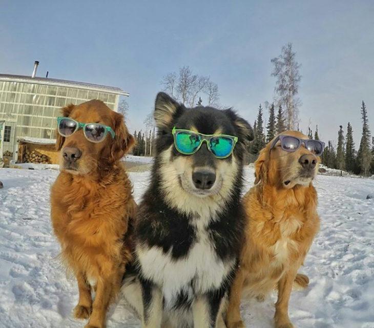 perros con lentes
