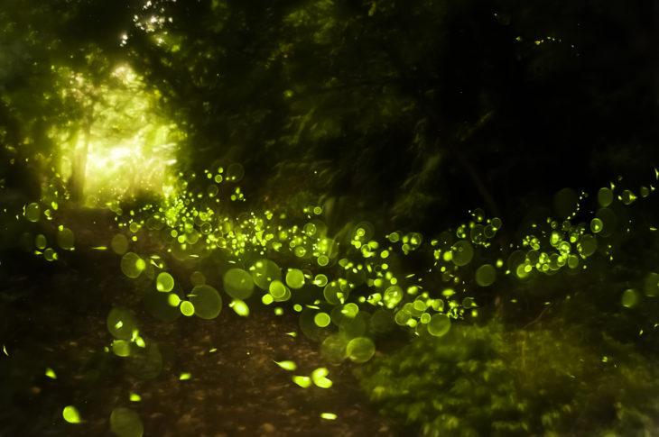 luciérnagas mágicas verdes