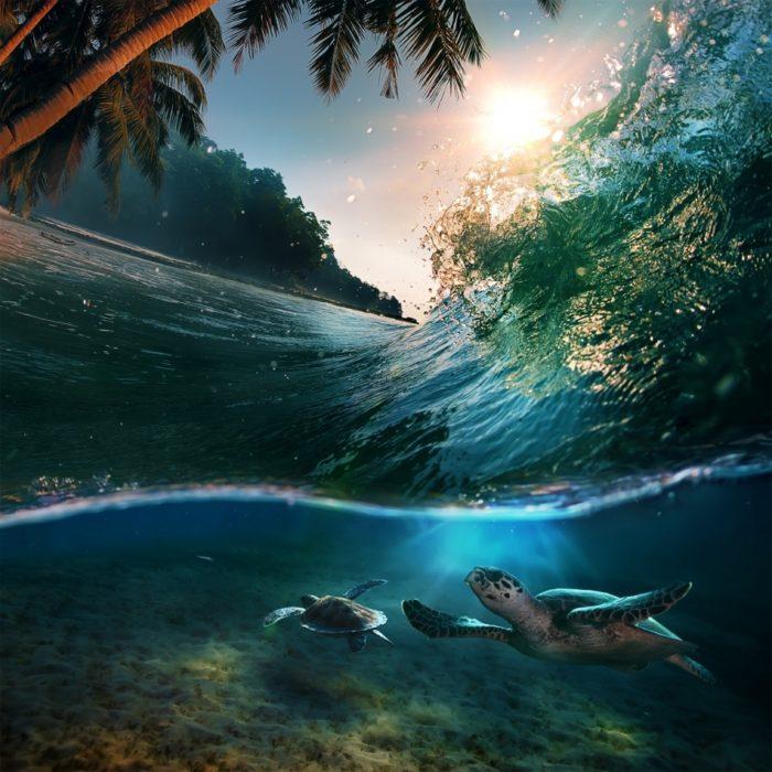 tortugas bajo una ola