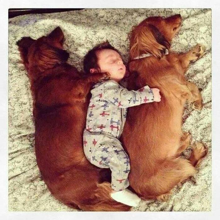 dormidos perro bebé perro