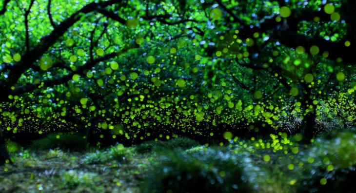 bosque frondoso con luciérnagas
