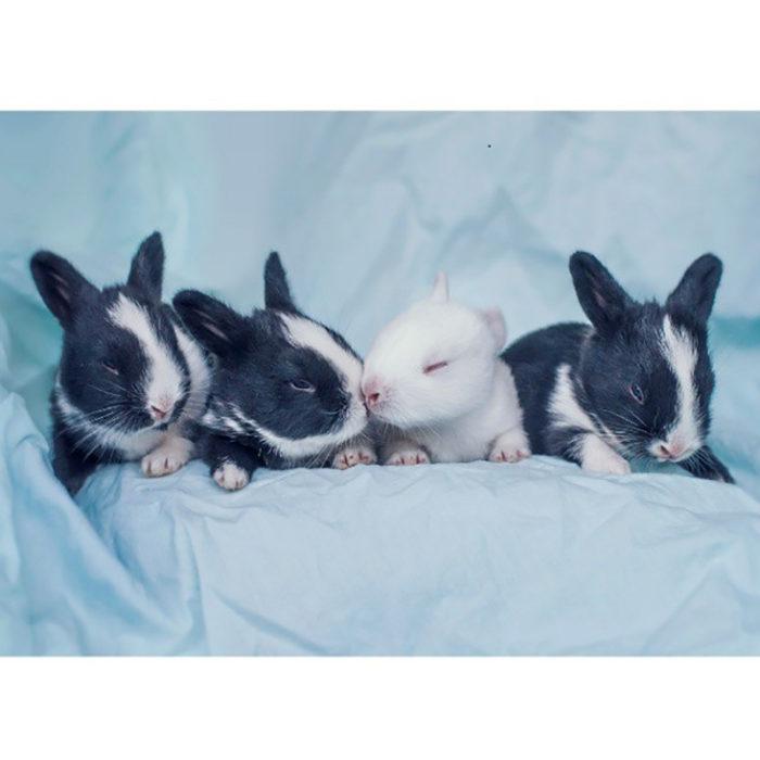 conejos recien nacidos