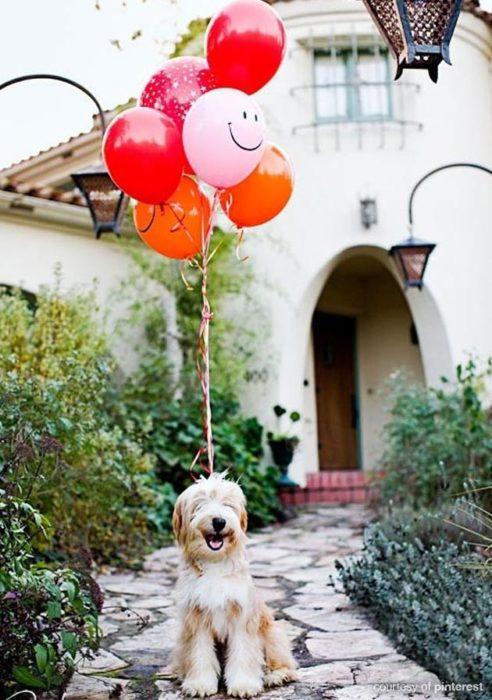 perro sonriente con globos