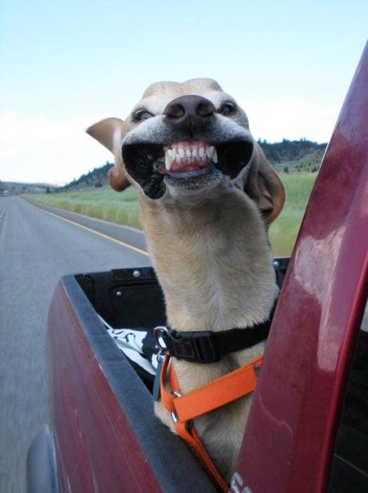 perro en una camioneta