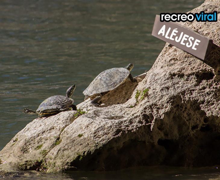 tortugas en roca