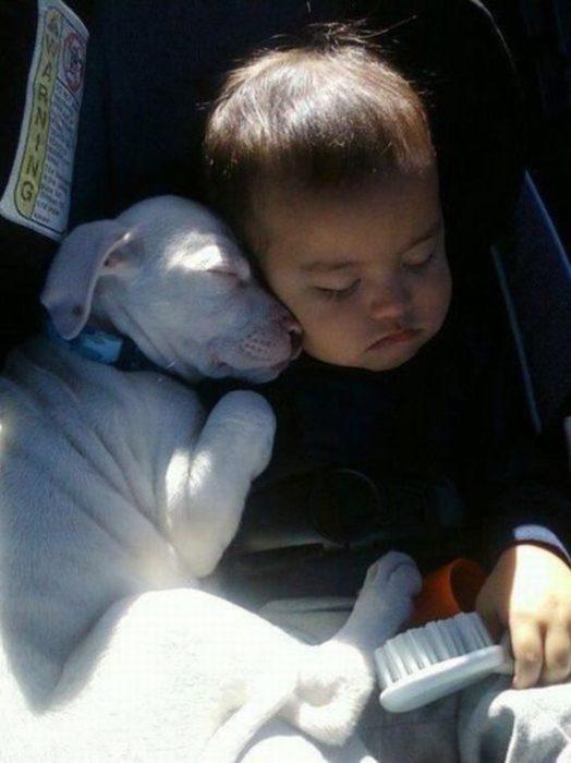 perrito blanco y niño dormidos en el carro