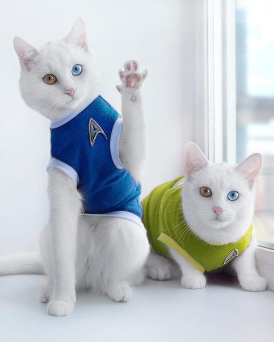 gatas con camisetas