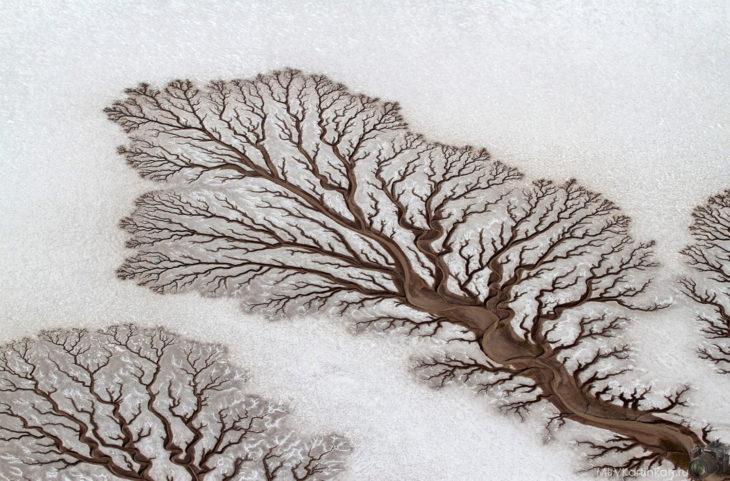 rios forman figuras de árboles en el desierto