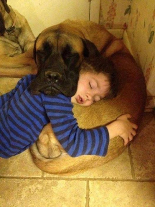niño usa como almohada a su perro