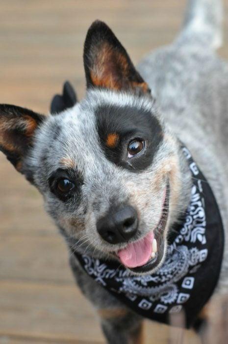 perrito con mancha en el ojo sonriendo