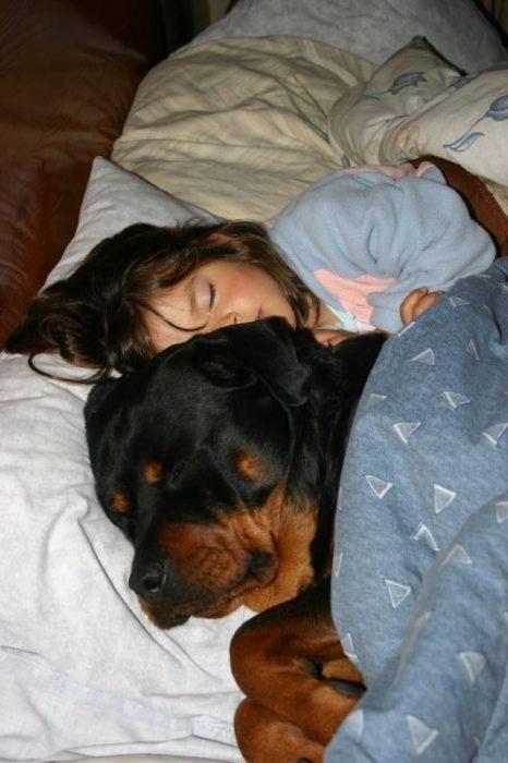 rottweiler y niña dormidos