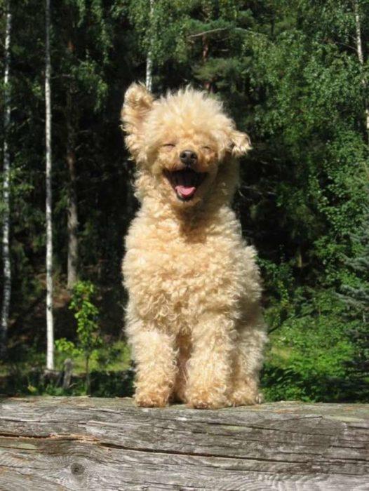 perrito en la anturaleza sonriendo